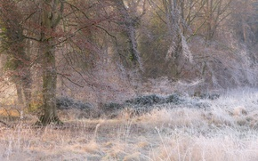 Picture frost, grass, trees, Icing
