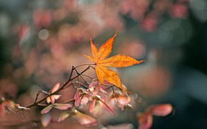 Picture autumn, background, leaf, branch