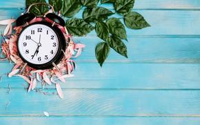 Picture leaves, petals, alarm clock
