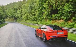 Picture drops, orange, movement, rain, overcast, vegetation, track, Jaguar, 2016, F-Type SVR Ring-Cat, 575 HP