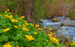 Wallpaper Stream, Buttercup spring, The Chistyakov, Spring, Nature, Nature, Yellow flowers, Yellow flowers, Spring