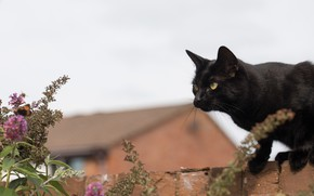 Picture brick, bokeh, black cat