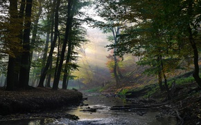 Picture Water, Nature, Grass, Trees, Forest, Leaves, Stones, Branches, Stream, The Sun's Rays