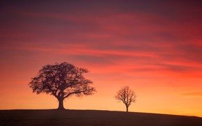 Wallpaper silhouette, Derbyshire, trees, England, glow