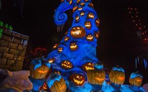 Picture pumpkin, Halloween, curl, pumpkins