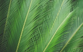 Picture leaves, sheet, Palma, palm