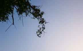 Picture the sky, tree, blue, foliage