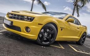 Picture Chevrolet, Camaro, Yellow, Palms