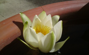 Picture Flower, Flowers, Water