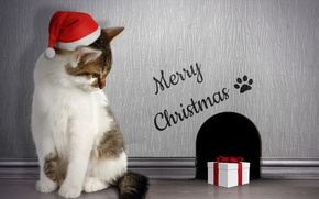 Picture cat, gift, Nora, Christmas, Christmas, Winter, Cats