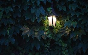 Picture leaves, light, lighting, grapes, lantern