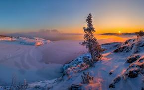 Picture winter, snow, sunset, lake, tree, ice, pine, Lake Ladoga, Leningrad oblast