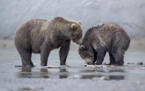 Picture bears, bear, bear