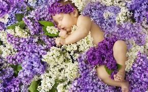 Picture flowers, sleep, sleeping, girl, baby