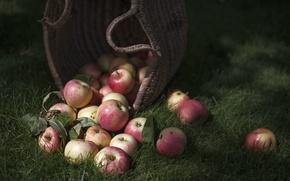 Wallpaper apples, food, fruit