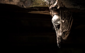 Picture background, lamp, web