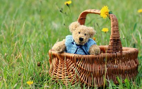 Picture summer, grass, mood, glade, toy, spring, yellow, bear, bear, bear, flowers, basket, Teddy, Mishutka