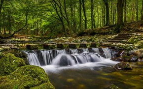 Picture forest, Park, river, waterfall, Northern Ireland