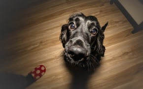 Wallpaper completed task, pet friends, the reward is a treat, wallpaper., bokeh, beautiful background, purebred happy ...