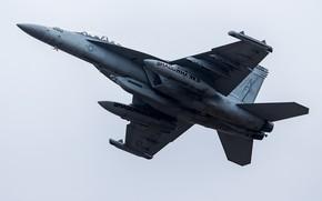 Picture the plane, flies, combat, F/A-18 Super Hornet, VAQ-141