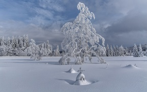 Picture winter, snow, trees, landscape, tree