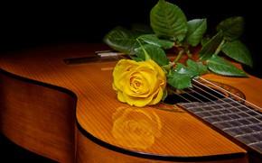 Wallpaper rose, yellow rose, guitar, style