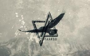 Picture music, dark, wallpaper, bird, crow, raven, electro, progressive, perfect, darkness, edm, producer, taarso