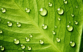 Picture Life, water, pattern, leaf, plant