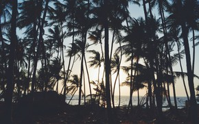 Picture palm trees, minimalism