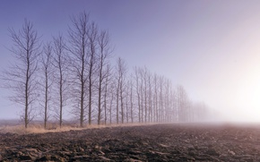 Picture field, trees, fog, arable land