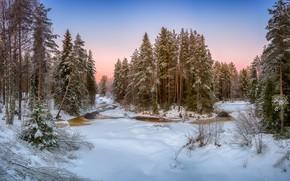 Wallpaper river, forest, winter