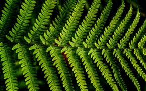 Picture macro, sheet, fern