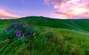 Picture greens, the sky, grass, clouds, flowers, hills, field, CA, USA, meadows