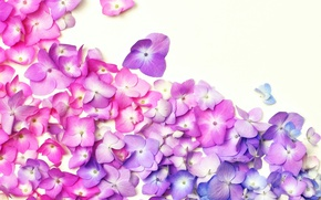 Wallpaper flowers, background, petals