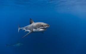 Picture sea, the ocean, fish, shark