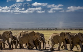 Picture nature, Africa, elephants, the herd