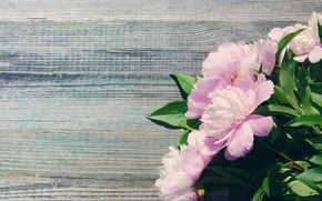 Wallpaper beautiful, pink, wood, peonies, pink, bouquet, flowers, peony