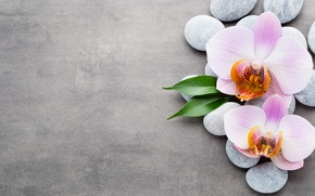 Picture stones, Orchid, pink, orchid