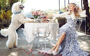 Picture white, flowers, smile, food, dog, makeup, garden, dress, hairstyle, blonde, shoes, sitting, poodle, rose petals, ...