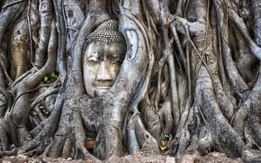 Wallpaper Ayutthaya, Thailand, tree