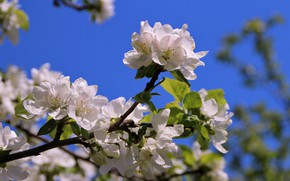 Picture macro, trees, joy, flowers, nature, mood, pictures, beauty, branch, garden, may, Apple, flowering, flora, Estonia