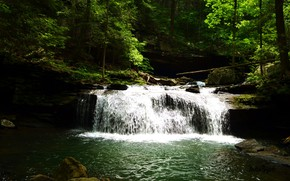 Picture forest, nature, river, waterfall
