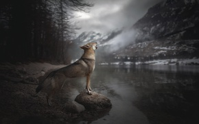 Wallpaper mountains, Voice of Wilderness, river, howl, dog