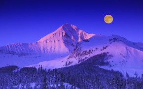 Picture winter, forest, the sky, snow, trees, mountains, the moon, Montana, USA