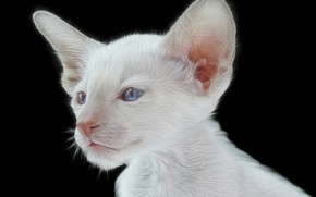 Picture muzzle, ears, kitty, blue eyes, black background, white kitten