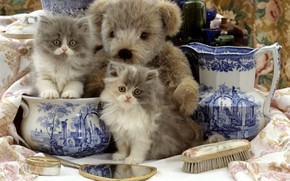 Picture toy, mirror, bear, kittens, pitcher