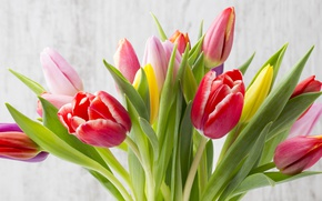 Picture flowers, bouquet, colorful, tulips, fresh, wood, flowers, beautiful, tulips