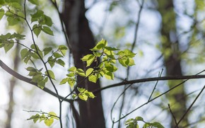 Picture forest, leaves, rays, light, tree, spring, may, green, Sunny, backlight, blossoming leaves
