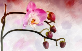 Picture flower, Bud, Orchid