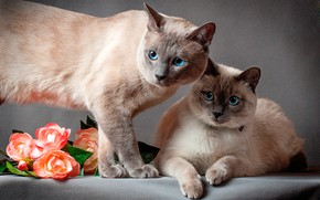 Picture cats, cats, pair, flowers